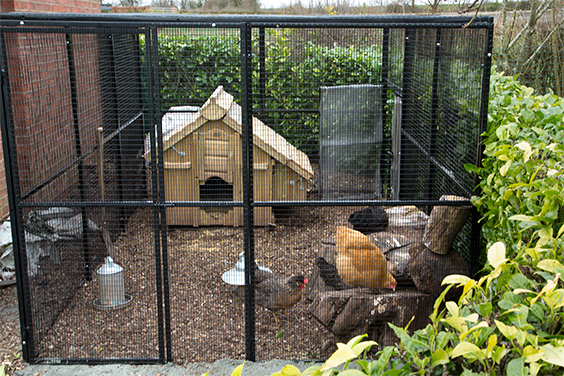 rat-proof-chicken-run