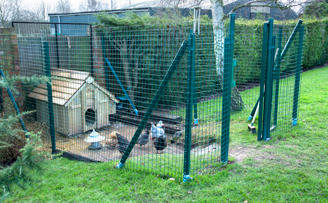 Intermediate chicken run for free ranging birds